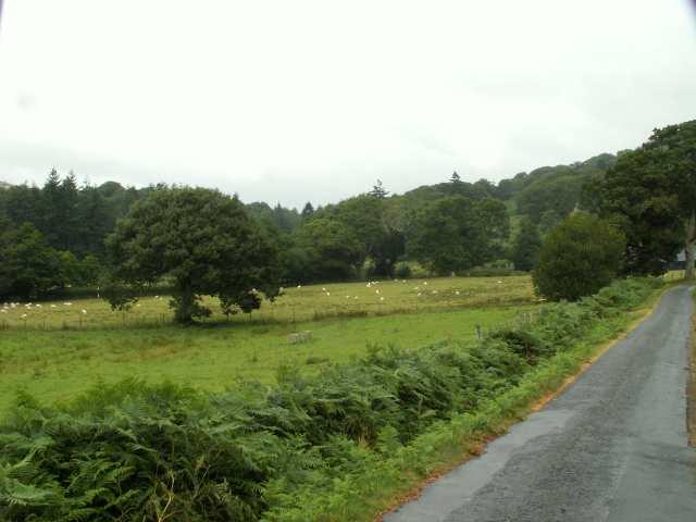Pasture near Melindwr, Eglwys Fach