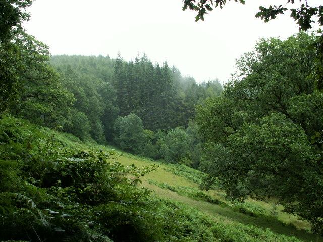 Woodland near Glaspwll