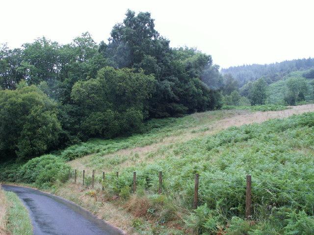 Woodland and bracken, Llyfnant Valley