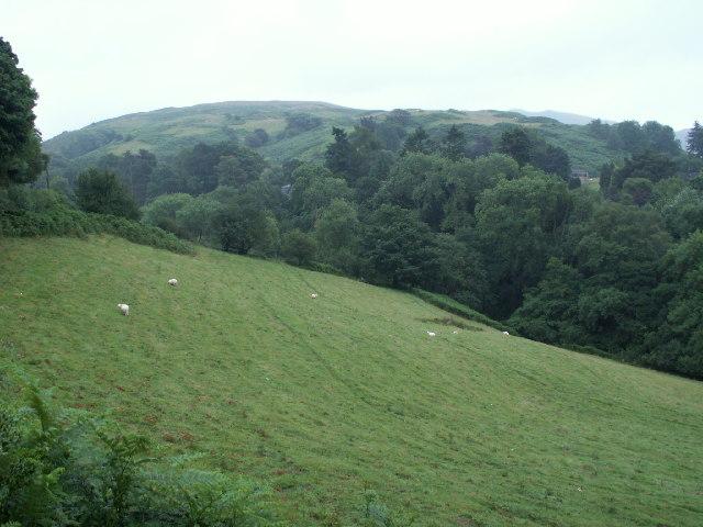 Pasture, Cwm Rhaiadr