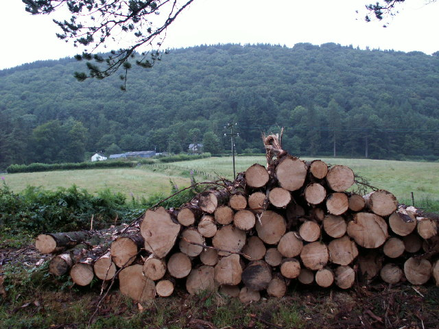 Timber, Garthowen