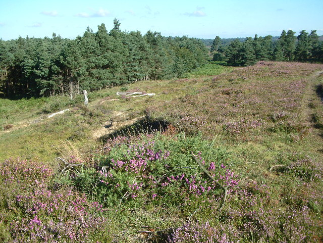 Dur Hill Down, New Forest
