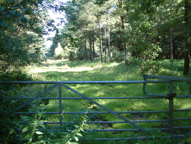 Forestry access, south of Ringwood
