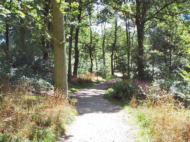 Woodland walk, Northcliffe Woods