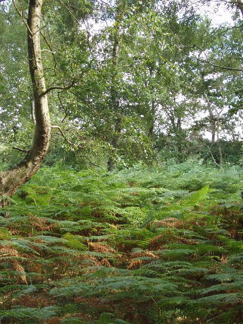 Egypt Woods, near Farnham Common