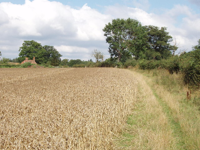Abbey Park Farm across a cornfield, by Littleworth Common