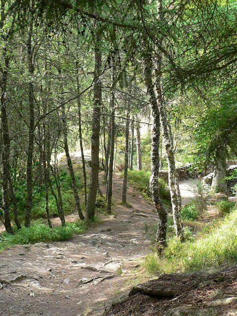 Woodland at the Falls of Bruar