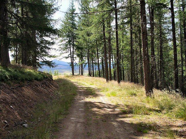 Track in Baluain Wood