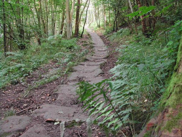 Packhorse Path in East Arnecliff Woods