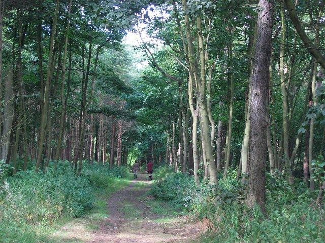 Woodland, Dalmeny