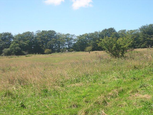 Sylvia's Meadow
