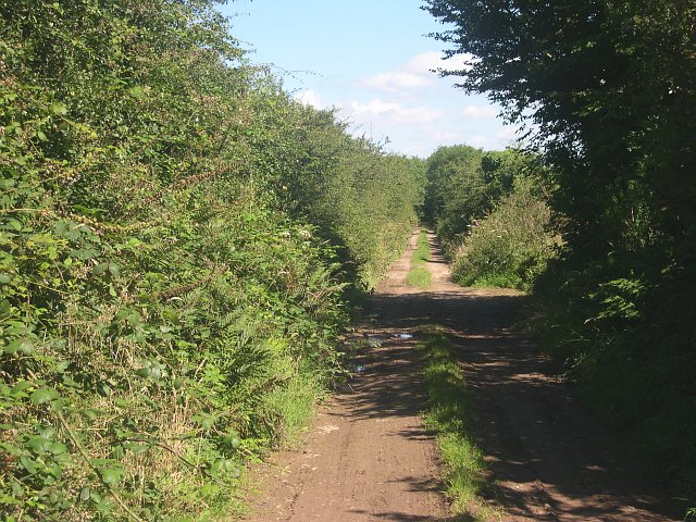 """Green lane"" on the eastern side of Hingston Down"