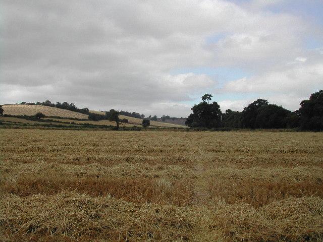 Farm fields at Woodborough