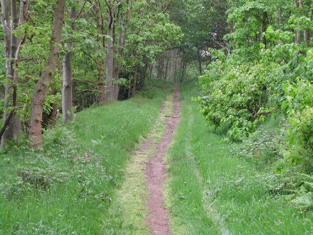 The path through Beech Hill Wood, Near Rufford Park