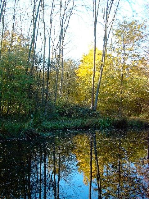 Pond in Wymarks Wood