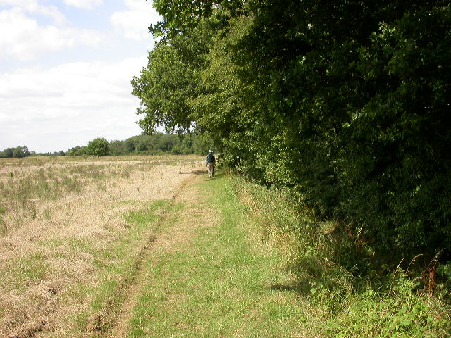 Beside Tilwick Wood