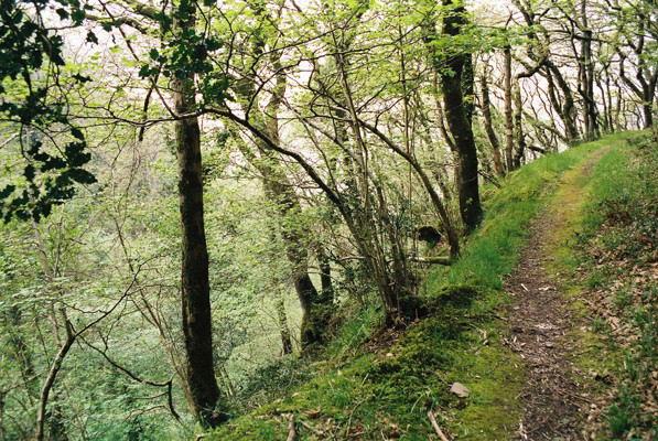 Coast path in Culbone Wood, Oare