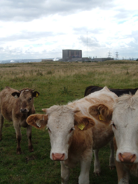 Hartlepool Nuclear Power Station - View from the road to the North Gare,