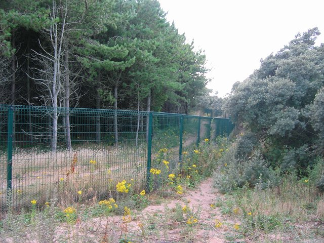 Archerfield  Fence.
