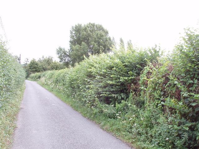 Skittle Green lane, near Bledlow