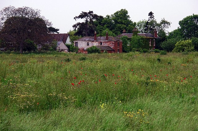 Wildflower Meadow, North Thoresby