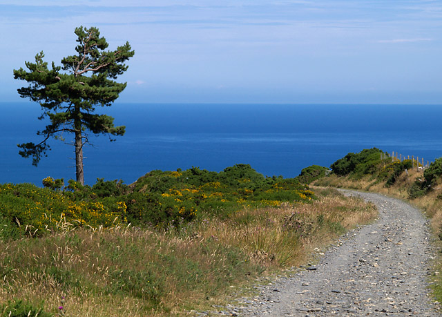 Skyhill Road, Scots Pine, sea and sky.   Isle of Man