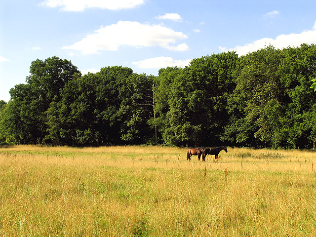 Orchard Copse and Farmland near Curridge
