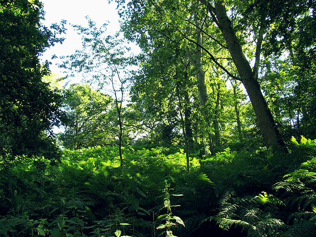 Woodland on Snelsmore East Common