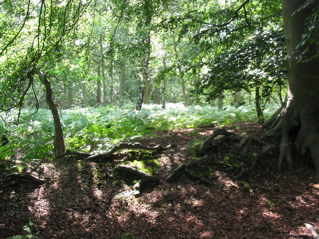 Woodland, Snelsmore Common Country Park