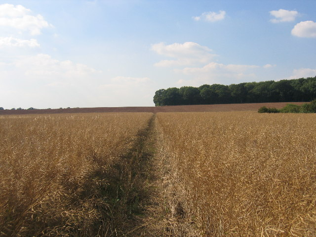 Footpath from Bubbenhall to Wappenbury