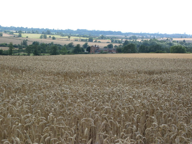 Wheat field, between Beeby and South Croxton, Leicestershire