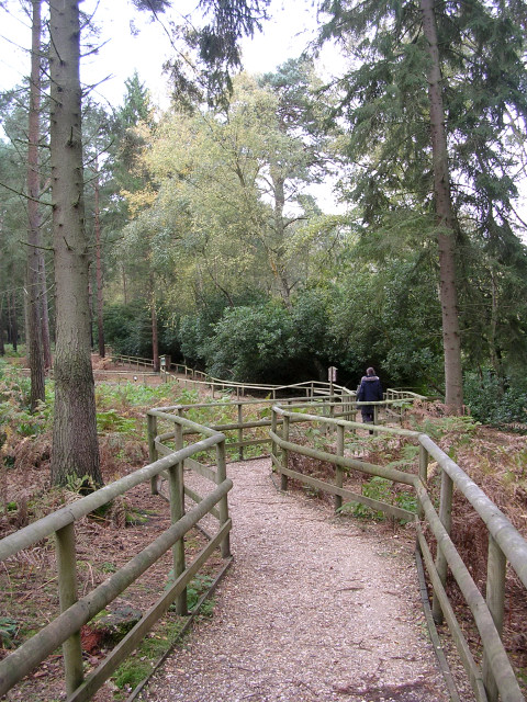 Woodland walk at the New Forest Otter, Owl and Wildlife Park
