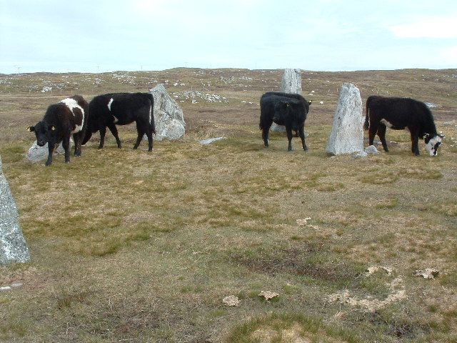 The Bulls of Calanais 2