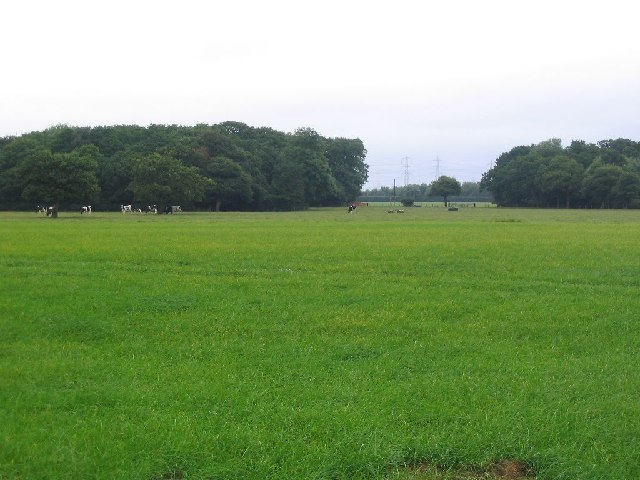 Pasture and Cows