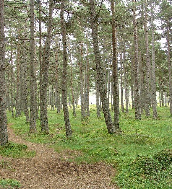 Woodland surrounding Allt-na-giubhsaich
