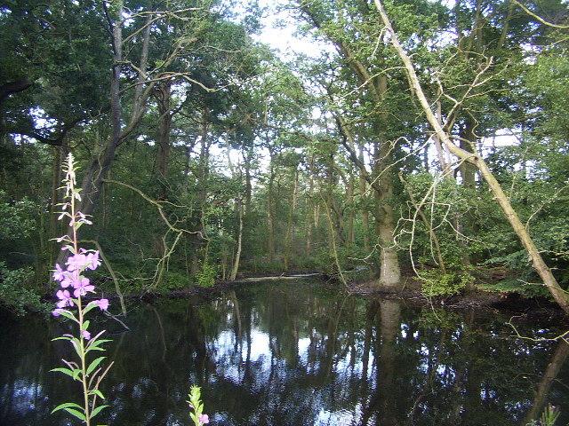 Pond at Woodcroft Gardens