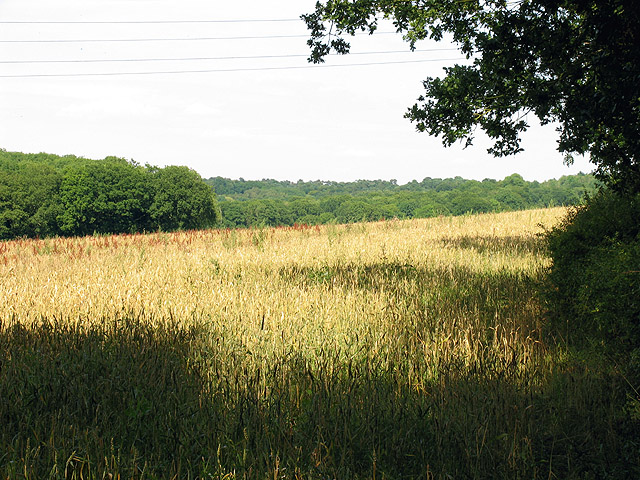 Farmland and Easton Copse: Ashmore Green