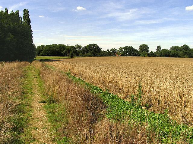 Footpath across Barley Field