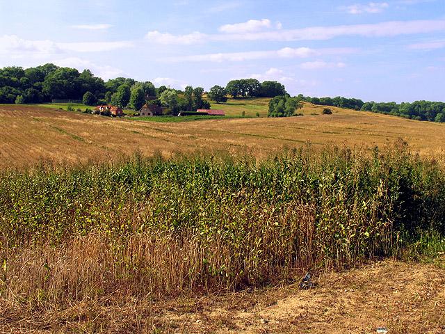 Farmland near Shaw: Newbury