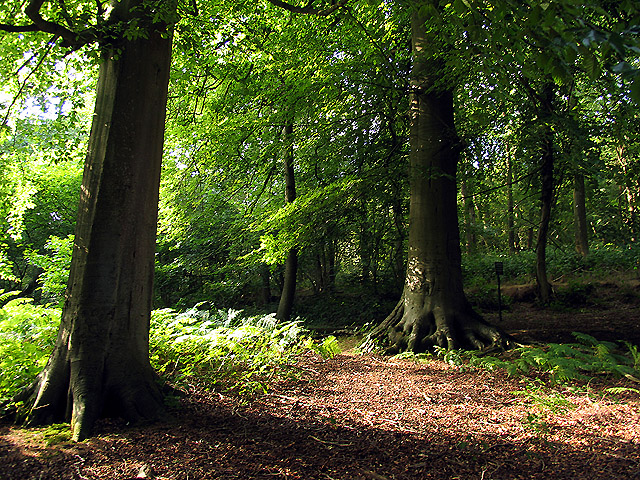 Woodland on Oareborough Hill