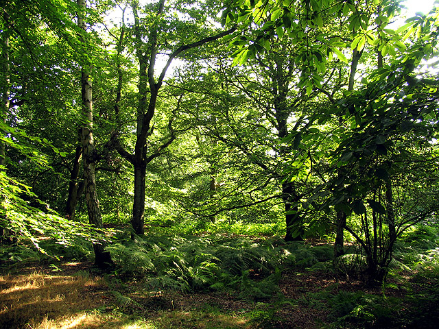 Oareborough Hill