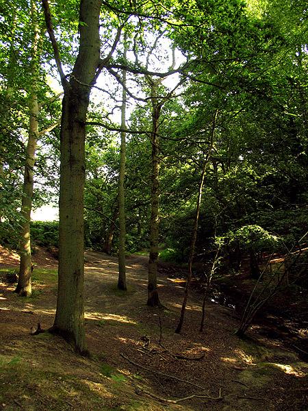 Sandy Lane on the Slopes of Oareborough Hill