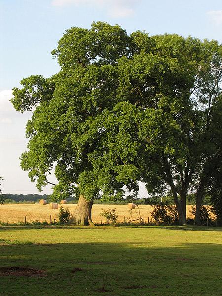 Paddock: Upper Woolhampton