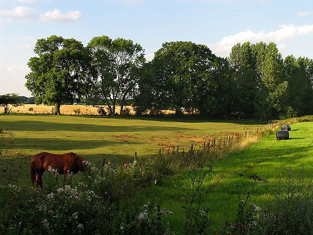 Paddock at Upper Woolhampton