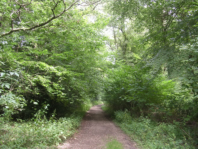 Path through Pondhead Inclosure, New Forest