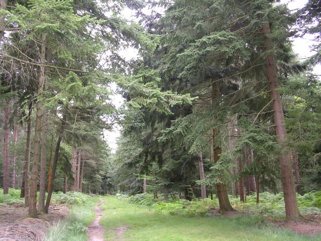 Path through the Parkhill Inclosure, New Forest