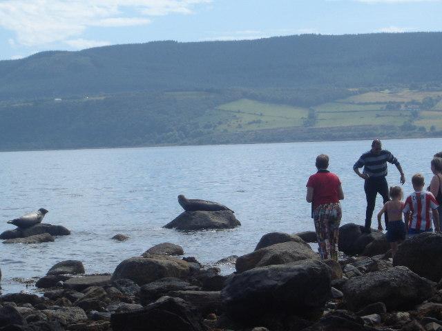 Seals and spectators Merkland Point, Arran