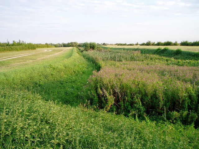 Car Dyke at Waterbeach