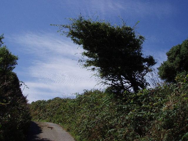 Hedge on way to Amalwhidden
