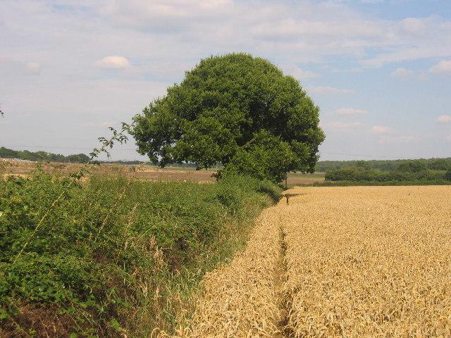 Bubbenhall - Wappenbury Footpath
